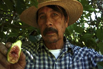 farmer vidal