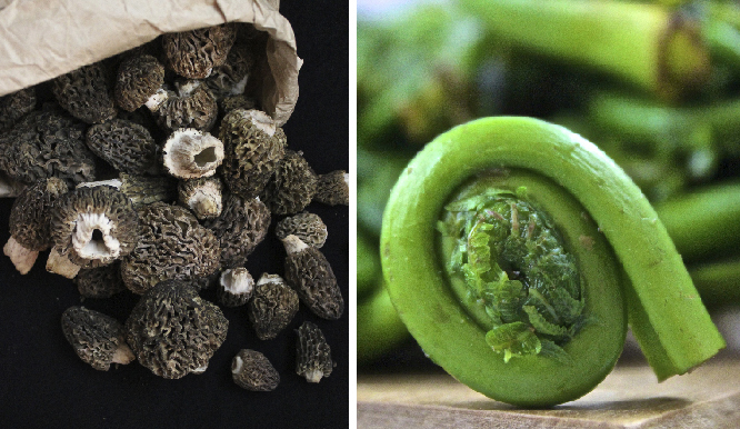 morels and fiddlehead2