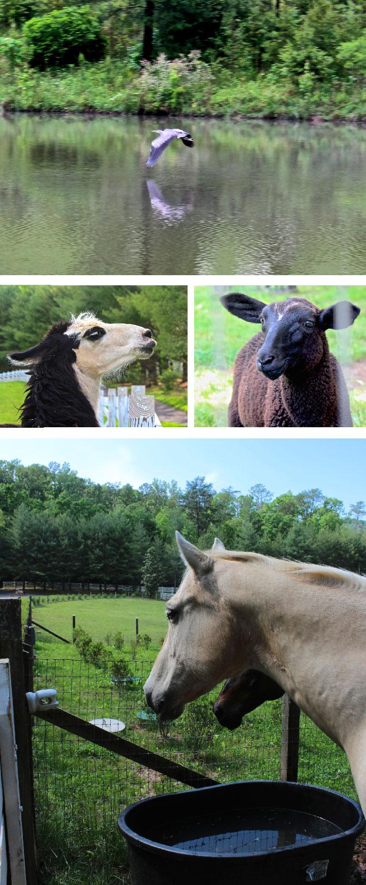 animal-lineup