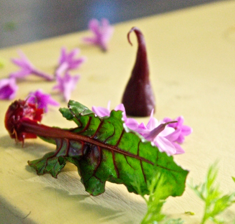Mix Garden Kale
