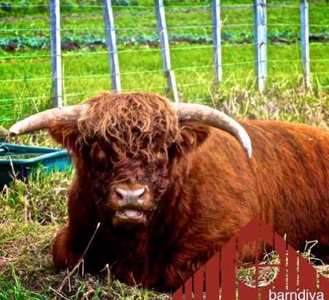 weleda bull topper