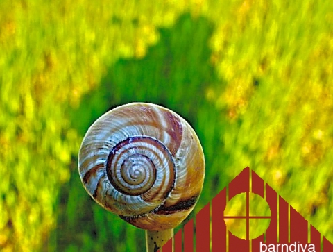 snail topper