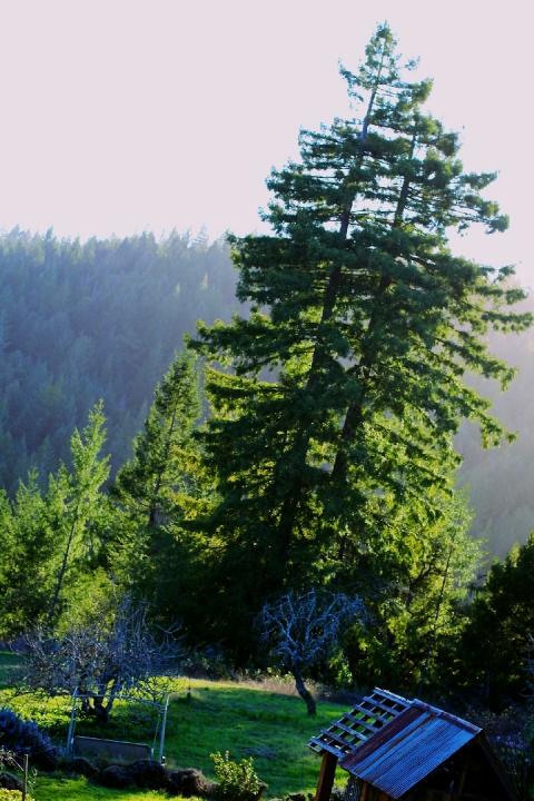 greenwood ridge